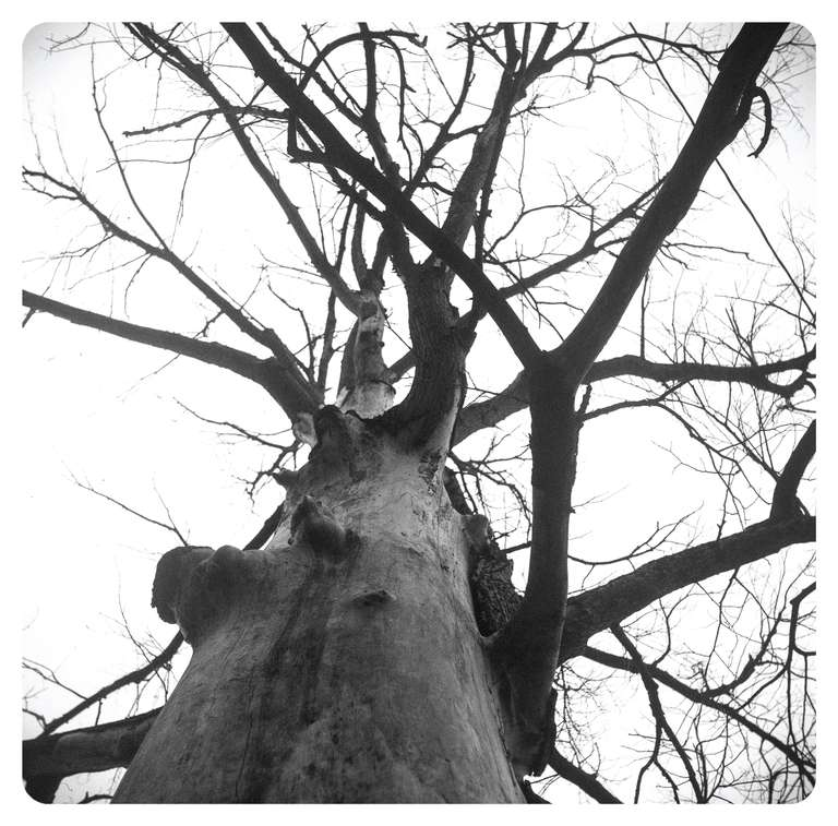 Tree looking up to sky